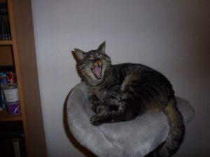 Read more about the article hvordan få en katt til å holde kjeft: