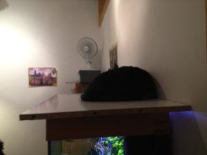 smart katt i varmen