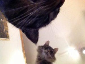 godt nyttår fra kattene