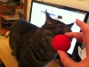Katter og rød nese