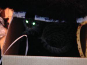 silhuetten i mørket