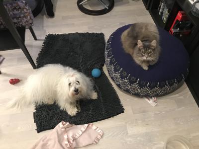 Dyrene mine til dyretannlegen